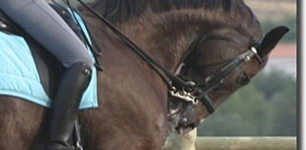 Rollkur ali hiperfleksija vratu