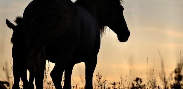 Skrb za ostarelega konja