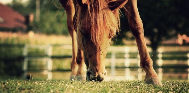 """Nasveti za delo s konjem: skriti """"skrivnostni dejavnik"""" za uspešno ježo"""