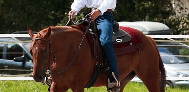 Drugačen pristop: Razumeti konjev zadnji del