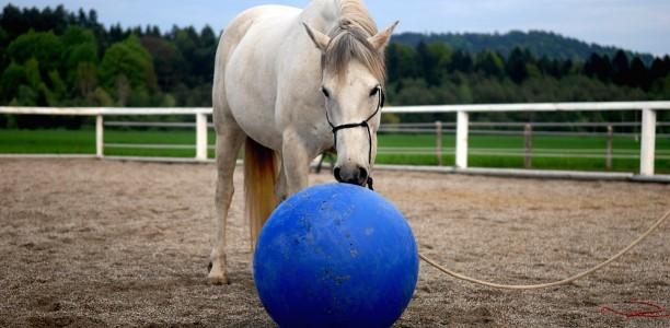 Nasveti za delo s konjem: V&O o obetavnem konju…