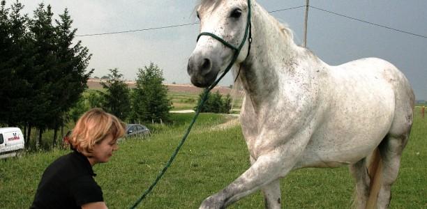Raztezanje konja