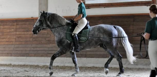 Koraki k boljšemu odnosu s konjem 3