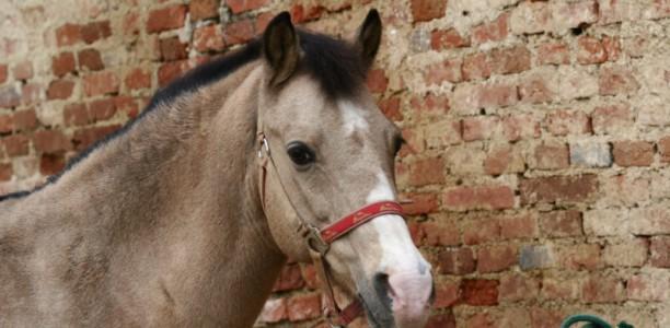 Nasveti za delo s konjem: o pravilnem vrstnem redu