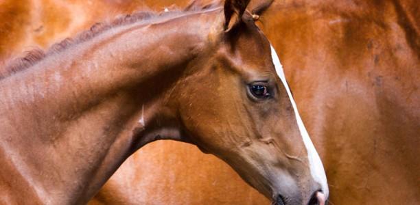 Koraki k boljšemu odnosu s konjem 5