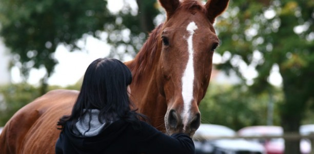 Koraki k boljšemu odnosu s konjem 6