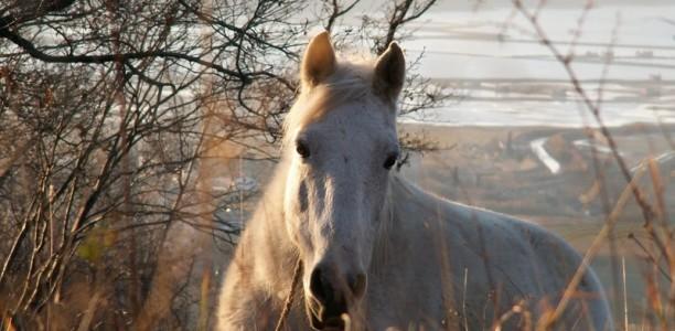 Koraki k boljšemu odnosu s konjem 7