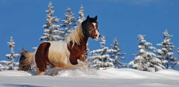 Zdravi konji tudi pozimi