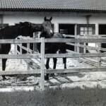 Stik z drugimi konji je življenjsko pomemben za psihično zdravje konj. Tudi pozimi naj se konji družijo v izpustih.