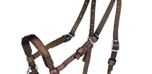 Kovina, mit in konjska bridkost
