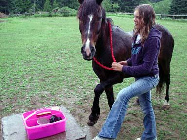 Star konj, sit ljudi, je bil osvojen s pomočjo ljubezni in spoštovanja.