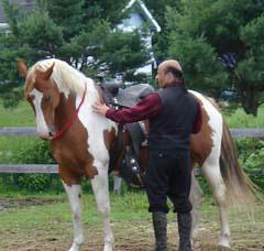 Konj se nauči moči zbranosti in se vse pogosteje svobodno zbere