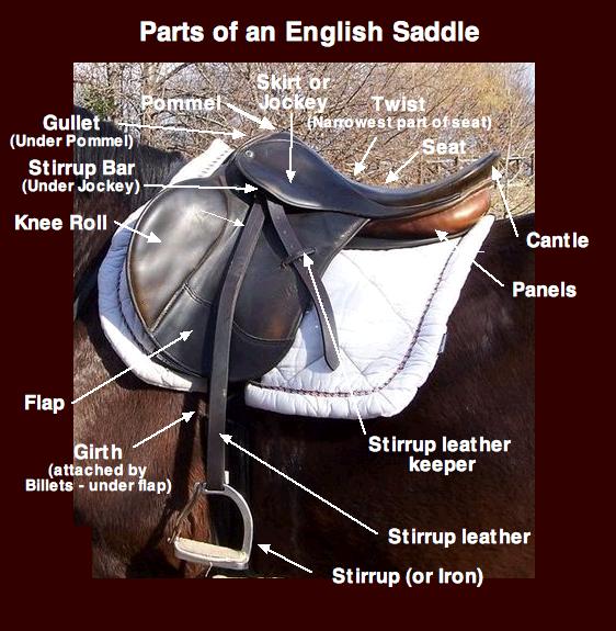 Deli sedla v angleškem jeziku za lažje razumevanje