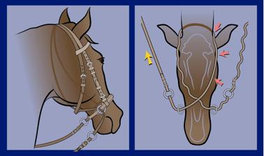 Slika 23. Model uzde brez brzde s spodaj prerižanimi vajetmi je neboleč, združljiv s fiziologijo treninga, zagotavlja vsestransko komunikacijo za vse discipline in zvišuje dobrobit konja in jahača. Napetost in popuščanje ene vajeti (rumena puščica) usmerja konja z dregljajem na nasprotni strani glave (rdeče puščice). Napetost in popuščanje obeh vajeti daje znak za upočasnitev ali ustavljanje z nežnim objemom cele glave.