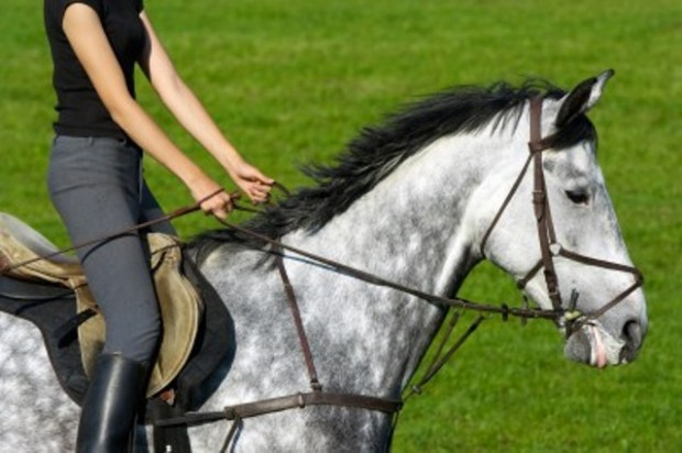 beginner-horse-riding-lessons